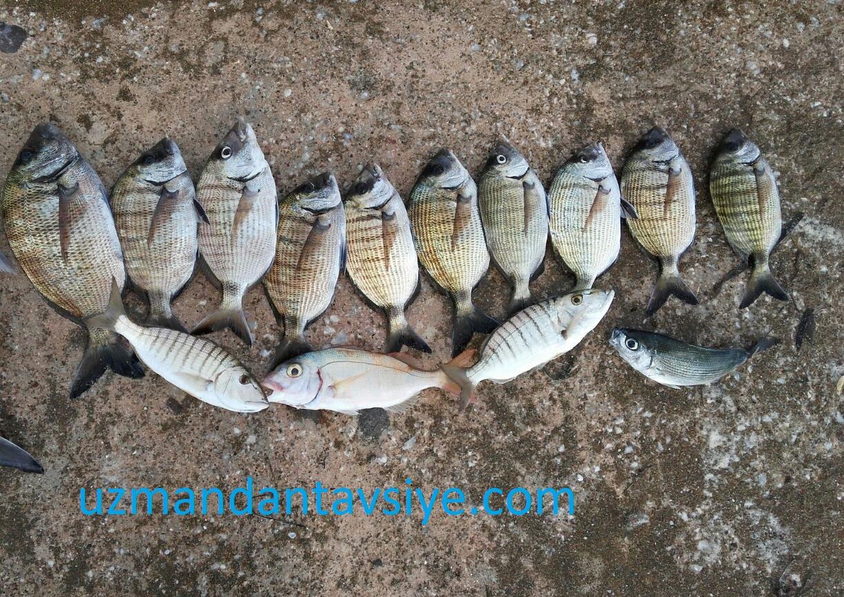 sargoz avı